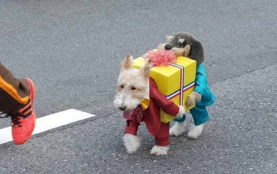 Dog Dressed As Two Dogs Holding A Present